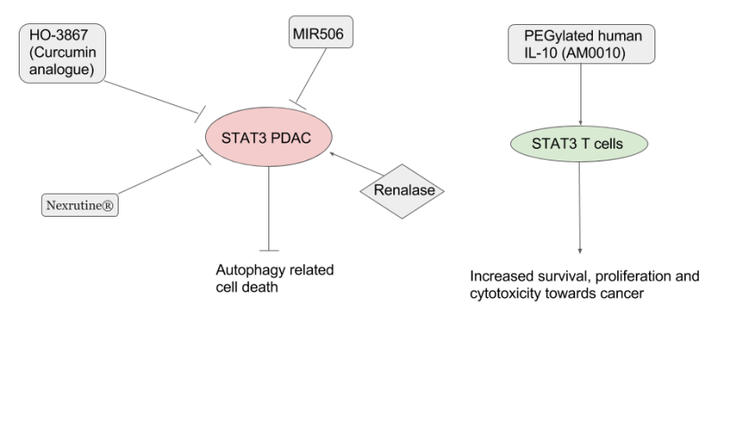 STAT3 inhibitors.png